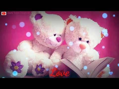 teddy love status
