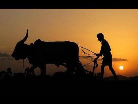 Farmers Day Whatsapp Status