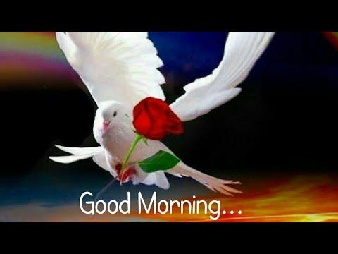 video good morning status